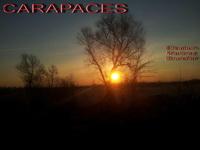 lien vers le roman Carapaces